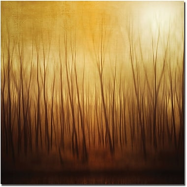 Trademark Global Philippe Sainte Laudy in.Ghost Forestin. Canvas Art, 18in. x 18in.