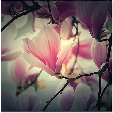 Trademark Global Philippe Sainte Laudy in.Magnolia Foreverin. Canvas Art, 14in. x 14in.