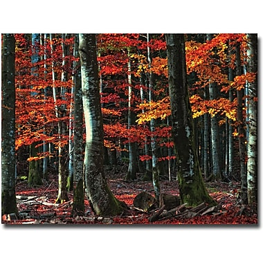 Trademark Global Philippe Sainte Laudy in.Food For Soulin. Canvas Art, 22in. x 32in.