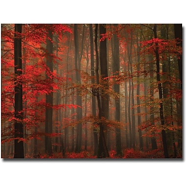 Trademark Global Philippe Sainte Laudy in.Enchanting Redin. Canvas Art, 30in. x 47in.