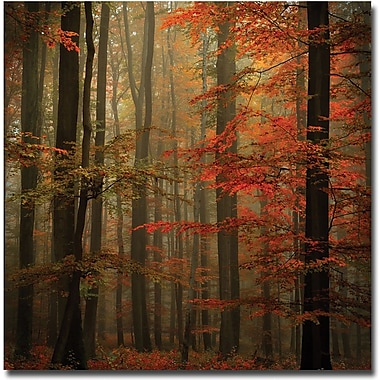 Trademark Global Philippe Sainte Laudy in.Fallin. Canvas Art, 18in. x 18in.