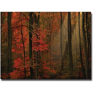 Trademark Global Philippe Sainte Laudy in.Poetry of Colorsin. Canvas Art, 30in. x 47in.