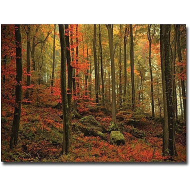 Trademark Global Philippe Sainte Laudy in.Transformation Fallin. Canvas Art, 30in. x 47in.