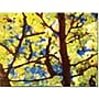 Trademark Global Amy Vangsgard Spring Tree Canvas Art,