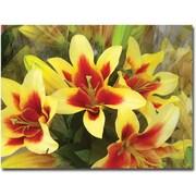 Trademark Global Amy Vangsgard Lillies Canvas Art, 35 x 47
