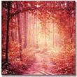 "Trademark Global Beata Czyzowska Young ""Enchanted Forest"" Canvas Art, 24"" x 24"""