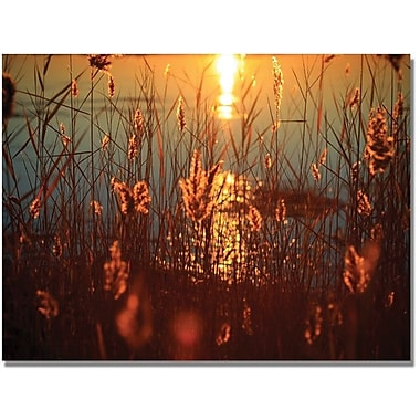 Trademark Global Beata Czyzowska Young in.Summer Nightsin. Canvas Arts
