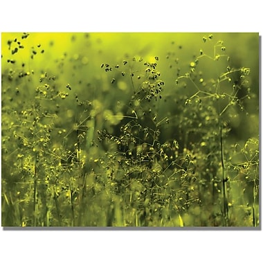 Trademark Global Beata Czyzowska Young  in.Symphony in Greenin. Canvas Arts