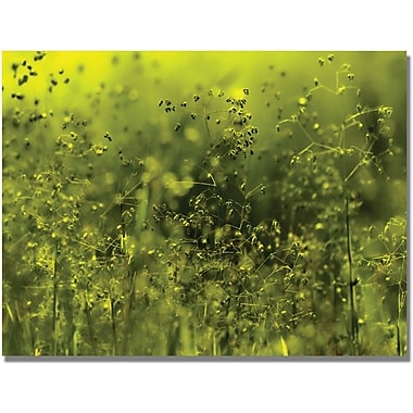 Trademark Global Beata Czyzowska Young  in.Symphony in Greenin. Canvas Art, 30in. x 47in.