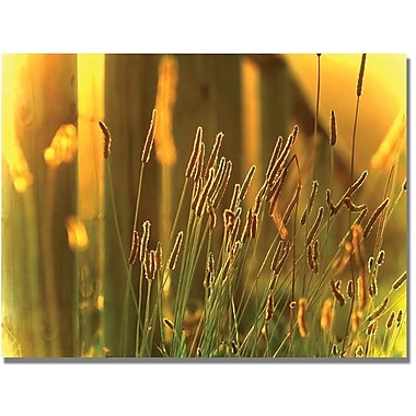 Trademark Global Beata Czyzowska Young in.When the Sun Goes Downin. Canvas Art, 18in. x 24in.