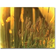"Trademark Global Beata Czyzowska Young ""When the Sun Goes Down"" Canvas Art, 30"" x 47"""
