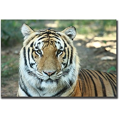 Trademark Global Cary Hahn in.Tigerin. Canvas Arts