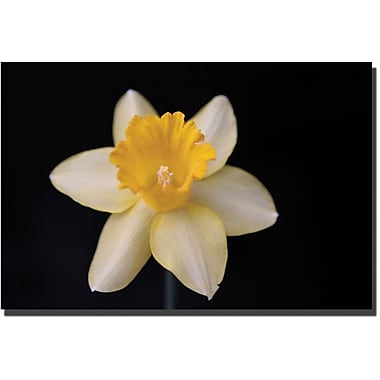 Trademark Global Cary Hahn in.Night Bloomin. Canvas Art, 16in. x 24in.