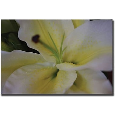 Trademark Global Cary Hahn in.Lilyin. Canvas Art, 24in. x 32in.