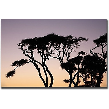 Trademark Global Cary Hahn in.Luminescencein. Canvas Art, 18in. x 24in.