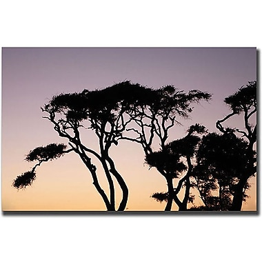 Trademark Global Cary Hahn in.Luminescencein. Canvas Art, 35in. x 47in.