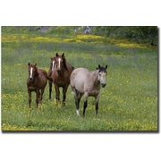 Trademark Global Cary Hahn Horses in a Field Canvas Art, 24 x 32