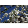 Trademark Global Cary Hahn in.Floral Treein. Canvas Art, 18in. x 24in.
