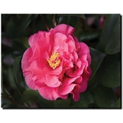 "Trademark Global Cary Hahn ""Rose"" Canvas Art, 18"" x 24"""