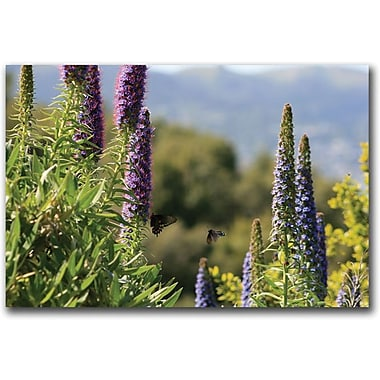 Trademark Global Colleen Proppe in.Angel Island Butterfliesin. Canvas Art, 16in. x 24in.