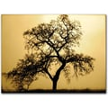 Trademark Global Colleen Proppe in.Pacific Oakin. Canvas Art, 14in. x 19in.