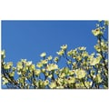 Trademark Global Kathie McCurdy in.Dogwood Skyin. Canvas Art, 30in. x 47in.