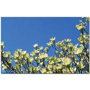 """Trademark Global Kathie McCurdy """"Dogwood Sky"""" Canvas Art, 30"""" x 47"""""""
