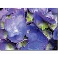 Trademark Global Kathie McCurdy in.Hydrangeain. Canvas Art, 35in. x 47in.