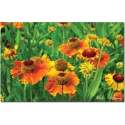 "Trademark Global Kathie McCurdy ""Orange Daisies"" Canvas Art, 30"" x 47"""