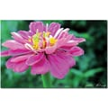 Trademark Global Kathie McCurdy in.Zinniain. Canvas Art, 30in. x 47in.