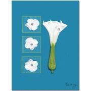 "Trademark Global Kathie McCurdy ""Moonflower"" Canvas Art, 24"" x 18"""
