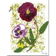 "Trademark Global Kathie McCurdy ""Plum Pansy"" Canvas Art, 24"" x 18"""