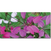"Trademark Global Kathie McCurdy ""Cleome II"" Canvas Art, 24"" x 47"""