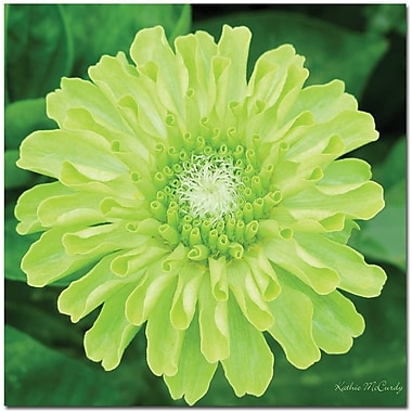 Trademark Global Kathie McCurdy in.Green Envy Zinniain. Canvas Arts