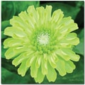 Trademark Global Kathie McCurdy in.Green Envy Zinniain. Canvas Art, 35in. x 35in.