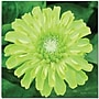 Trademark Global Kathie McCurdy Green Envy Zinnia Canvas