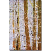 "Trademark Global Kathie McCurdy ""Rainbow Woods"" Canvas Art, 47"" x 30"""
