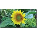 Trademark Global Kathie McCurdy in.Sunflowerin. Canvas Art, 24in. x 47in.