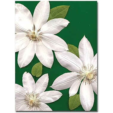 Trademark Global Kathie McCurdy 'White Clemantis' Canvas Art