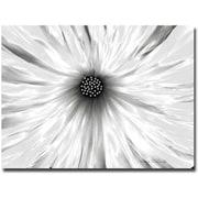 Trademark Global Kathie McCurdy White Garden Canvas Art, 35 x 47