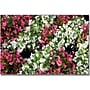Trademark Global Kathie McCurdy Begonia Garden Canvas Art,