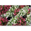 Trademark Global Kathie McCurdy in.Begonia Gardenin. Canvas Arts