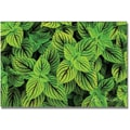 Trademark Global Kathie McCurdy in.Coleusin. Canvas Art, 16in. x 24in.