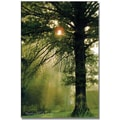 Trademark Global Kathie McCurdy in.Magical Treein. Canvas Arts