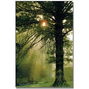 "Trademark Global Kathie McCurdy ""Magical Tree"" Canvas Art, 47"" x 30"""