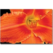 "Trademark Global Kathie McCurdy ""Orange Day Lily"" Canvas Art, 18"" x 24"""