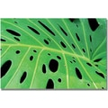 Trademark Global Kathie McCurdy in.Tropical Leafin. Canvas Art, 30in. x 47in.