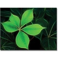 Trademark Global Kathie McCurdy in.Big Green Leafin. Canvas Arts