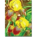 Trademark Global Kathie McCurdy in.Iris Yellow Batikin. Canvas Arts
