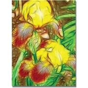 "Trademark Global Kathie McCurdy ""Iris Yellow Batik"" Canvas Art, 47"" x 35"""